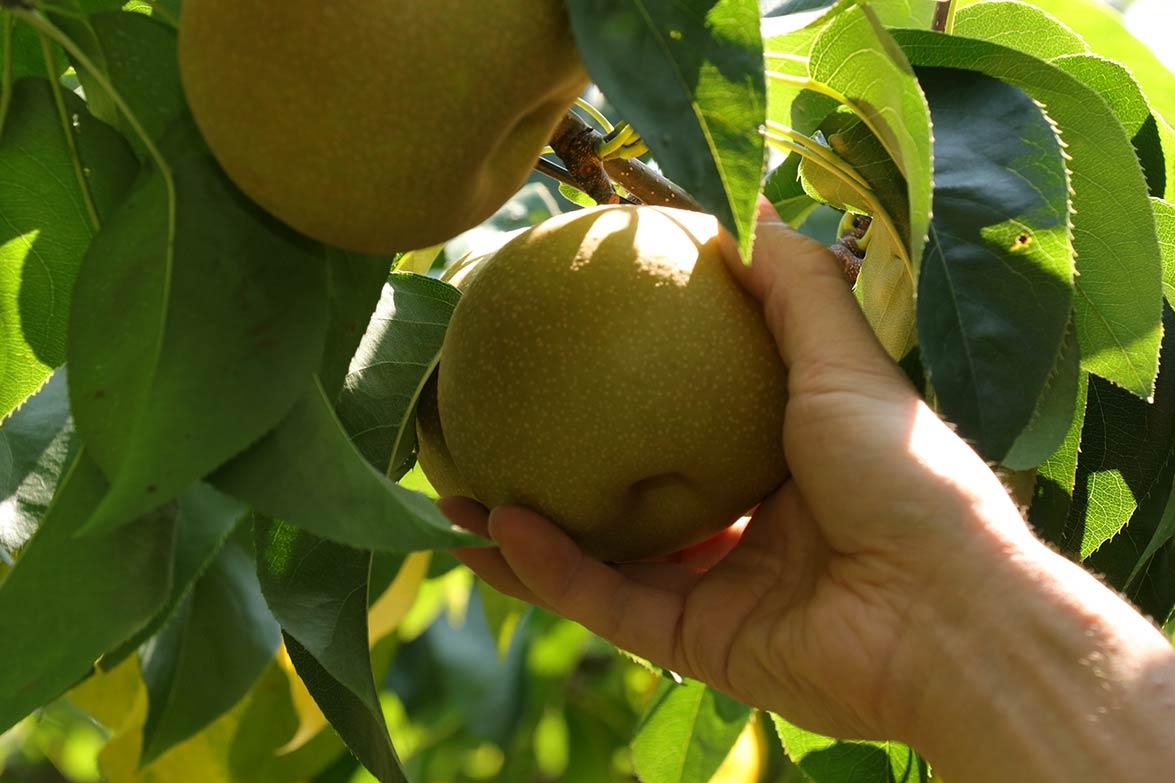 自然型農業